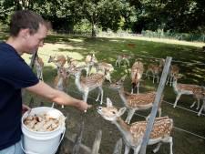 Actie voor herten kinderboerderij Terneuzen doorslaand succes