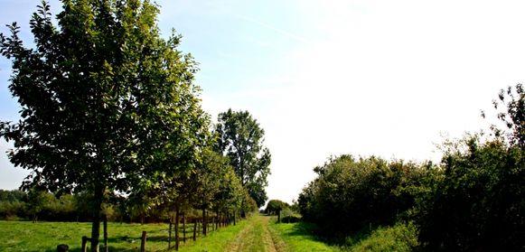 De Meikensbossen op de grens van Tielt en Dentergem.