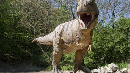 Lachwekkend kleine armpjes van grote tyrannosaurus hadden dan toch nut