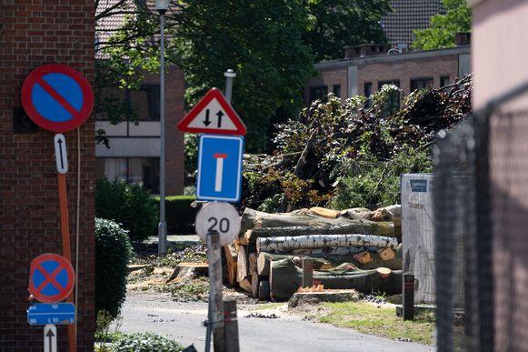 In de Schijfstraat worden 24 bomen gekapt.