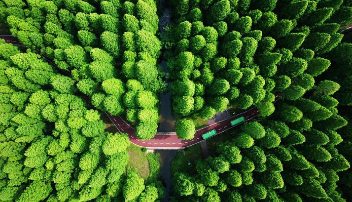 Creatief met drone en de kleur groen. Foto gemaakt in Yellow Sea National  Park in het Chinese Dongtai.