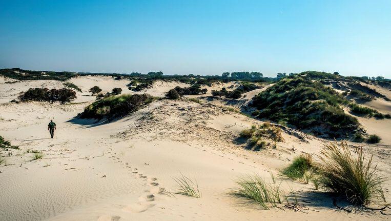 Het duinlandschap bij Wassenaar. Beeld Raymond Rutting