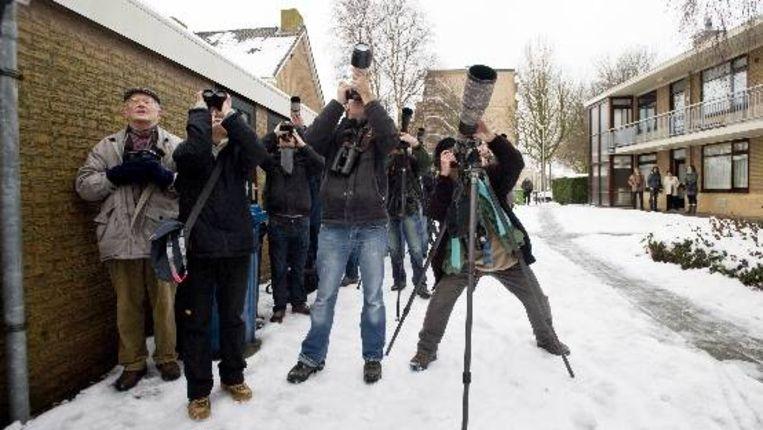 Vogelaars en fotografen proberen dinsdag een glimp op te vangen van de zeldzame baltimoretroepiaal die in de wijk Oudorp in Alkmaar verblijft. Beeld