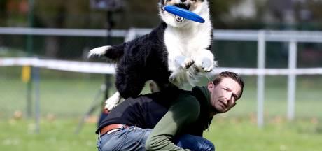 Honden en bazen geven wervelende frisbeeshow in Brummen