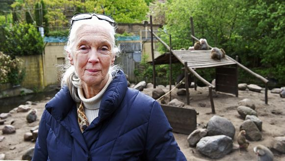 De Britse Jane Goodall tijdens een bezoek aan een Nederlandse zoo in 2012.