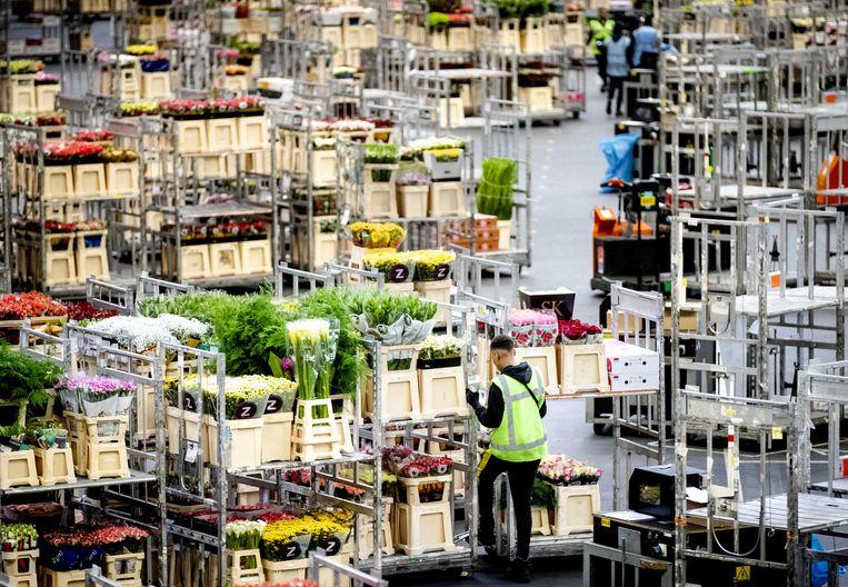 De bloemensector moet het vooral van de verkoop in eigen land hebben, die tijdens de coronacrisis zelfs is toegenomen. Maar het overgrote deel van de export ligt nog steeds plat.  Beeld ANP