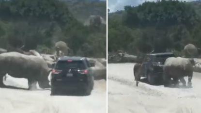 VIDEO. Neushoorn valt auto met toeristen aan in safaripark