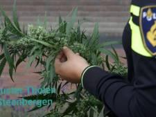Hennepkwekerij in aanbouw opgerold in Steenbergen, man aangehouden