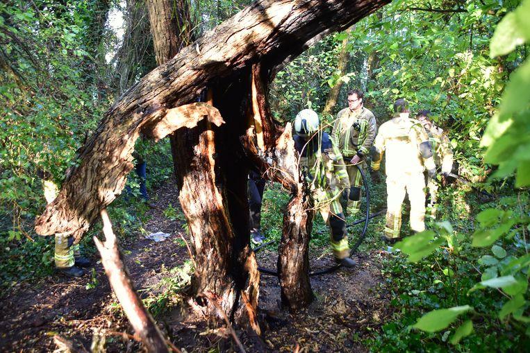 De boom waarin brand werd gesticht, was vermolmd en kwam eerder tijdens een storm al gedeeltelijk naar beneden.