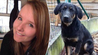 """""""Wie heeft Nellie gezien?"""": West-Vlaamse Audrey (25) wordt aangereden terwijl ze met haar puppy op wandel is en nu is het dier zoek"""