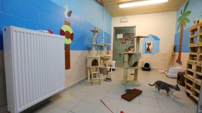 Stad Oostende en Blauwe Kruis zitten opnieuw samen over betaling nieuw dierenasiel
