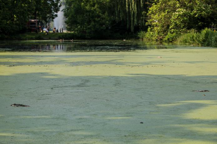 Vissen In Vijver : Dode vissen in vijver velp brandweer voegt vers water toe rheden