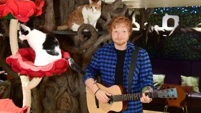Het wassen beeld van Ed Sheeran staat momenteel op een wel héél vreemde plaats