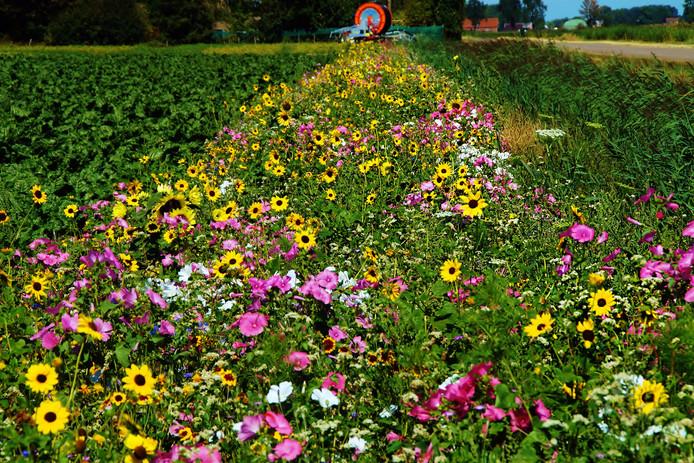 Een bloemrijke akkerrand.
