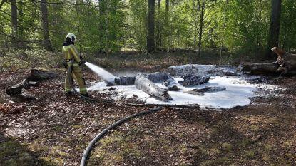 """Zoniënwoud kreunt onder vele extra bezoekers: """"Brandweer moest zelfs al kleine bosbrand komen blussen"""""""