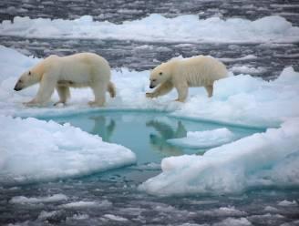 """Groot onderzoek: """"Noordpool kan binnenkort al ijsvrij zijn in de zomer"""""""