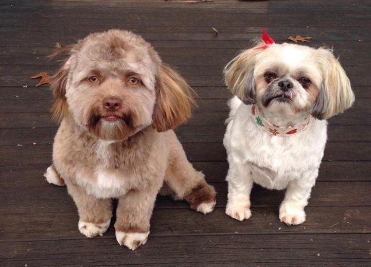 Yogi (links) is een doodgewone puppy, maar zijn snoet zorgt voor uiteenlopende reacties op het internet.