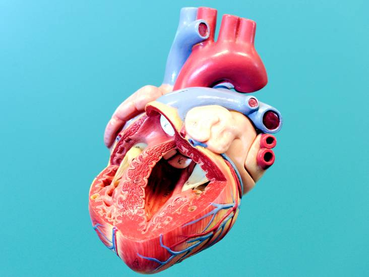 Hoe je lichaam zélf van plastic een nieuwe hartklep maakt