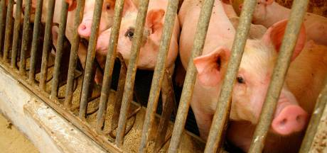 Plus de 300 millions d'animaux abattus l'année dernière en Belgique