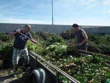 Boxmeer: 'Wegbrengen grof tuinafval moet gratis blijven'