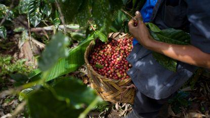 Reportage brengt kinderarbeid op plantages die leveren aan Starbucks en Nespresso aan het licht