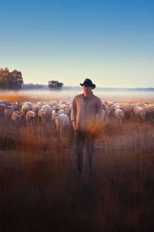 'Een herder met stress, hoe ironisch is dat?' Stijn Hilgers uit Goirle stopte er zelfs om