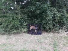 Mechelse herder gevonden in kooi op carpoolplaats Nieuwegein