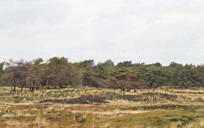 Een beeld op de Kalmthoutse Heide.