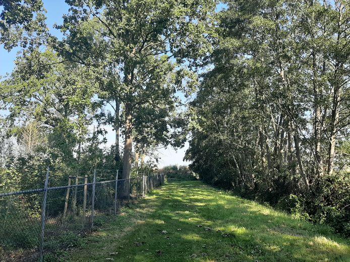 De houtwal (rechts) die in de plannen van de gemeente moet wijken. Links, naast het hek, het terrein van zwembad De Spetter.