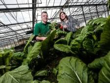 De Groene Schuur in Groessen: 'Meer weten over eten is goed voor gezondheid'