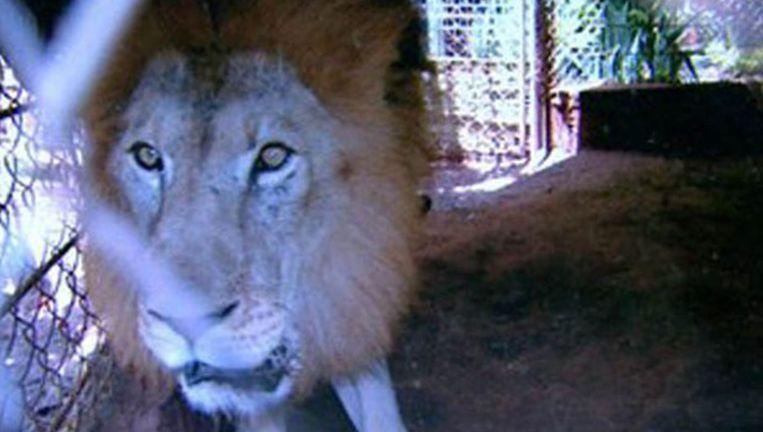 Rawell de leeuw