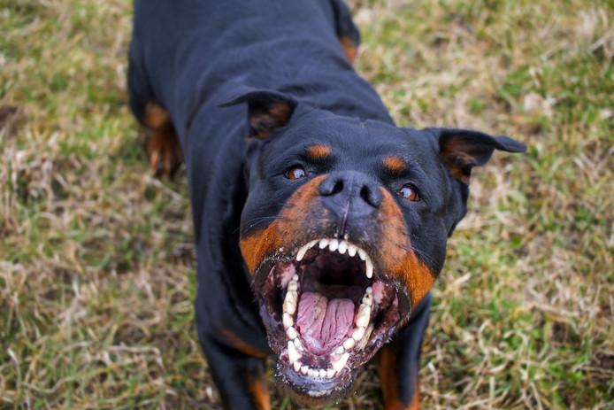 Foto ter illustratie. De hond in het verhaal is een gelijksoortige.