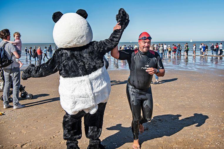 High five voor een deelnemer aan de actie Sea Swim van het WNF in Scheveningen. Beeld Foto Guus Dubbelman / de Volkskrant