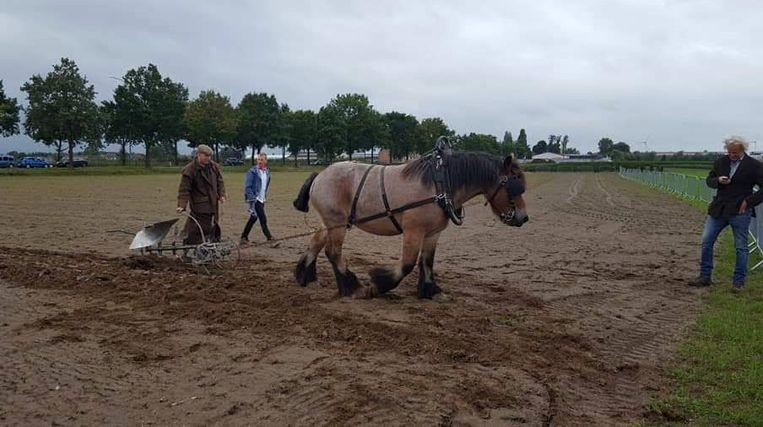 Paarden demonstratie aan de Zuidlaan