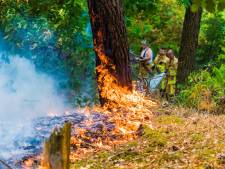 Bosbrand aan 't Kamerven in Gerwen snel onder controle, 900 vierkante meter verbrand