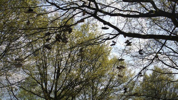 Schoenen in de boom aan de Looveltlaan.