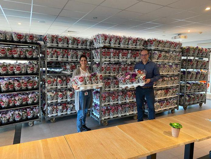 Kweker Sjaak Buijs (rechts) overhandigt de primula's aan Marjolein van der Matten van het Maasstad Ziekenhuis in Rotterdam.