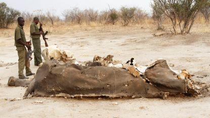 Al 55 olifanten gestorven op 2 maanden tijd door aanhoudende droogte in Zimbabwe