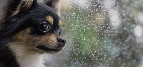 """Hondje sterft in snikhete wagen in Brugge, politie waarschuwt: """"Je raam op een kier zetten heeft geen enkel effect in deze temperaturen"""""""