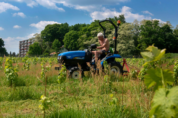 Wijngoed Mariëndaal wordt momenteel zomerklaar gemaakt.