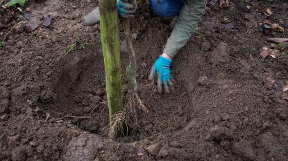 GroenRood Deinze koopt bomen om helden uit de zorg te bedanken