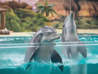 Wat we van dolfijnen kunnen leren over de menopauze