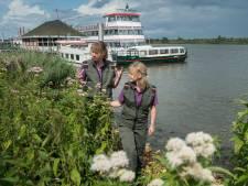 Toename toeristen in de Biesbosch: <br>'Natuur kan veel hebben en wordt hier zelfs groter'
