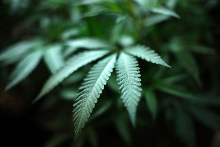 De cannabis was bestemd voor het Verenigd Koninkrijk.