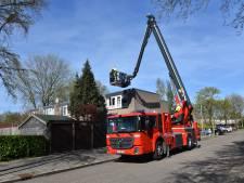 Acht weken oud poesje vast in conifeer in Nijmegen