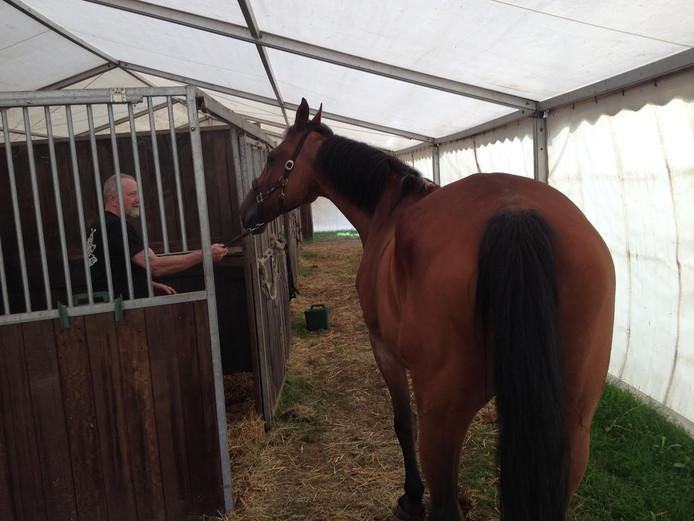 De paarden van manege De Wittegheit logeren momenteel in een tent.