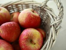 Fruitboomgaard Hengstdijk mag blijven van Hulster gemeenteraad