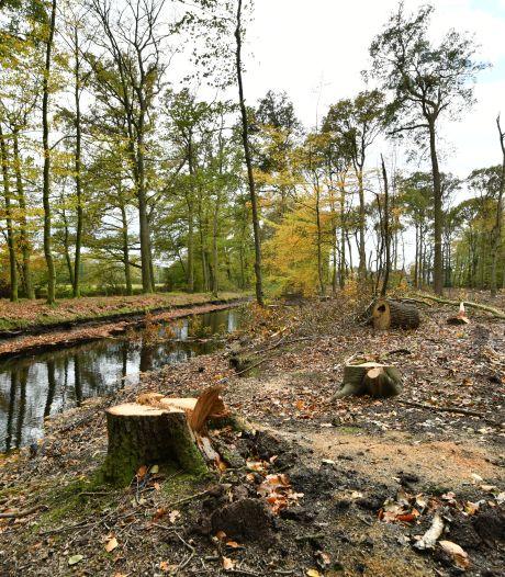 Bomenkap 'Eilandjes' in Oldenzaal afgerond: ruim 600 bomen tegen de vlakte gegaan