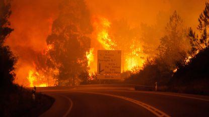 Dodental loopt op: minstens 62 doden en 59 gewonden bij zware bosbrand in Portugal