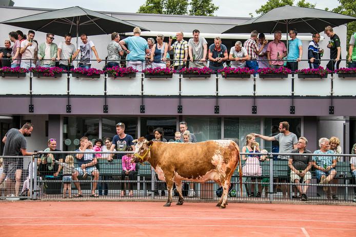 Tennisvereniging Honselersdijk heeft wel vaker bijzondere acties georganiseerd, zoals koeschijten op de tennisbaan. Op vrijdag 21 juni begint een 24-uurs tennismarathon.